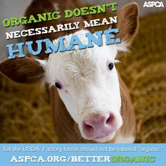 Organic doesn't necessarily mean humane. Tell the USDA: factory farms shouldn't be labeled organic! http://www.aspca.org/fight-cruelty/advocacy-center/usa-factory-farms-should-not-be-able-meet-usda-organic-standards?ms=so_def_advocacyalert-organic-standards-alert-201507&initialms=so_def_advocacyalert-organic-standards-alert-201507&utm_medium=social&utm_campaign=shareable&utm_source=advocacyalert-organic-standards-alert-201507