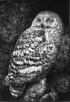 'Snowy Owl' by Chris Wormell