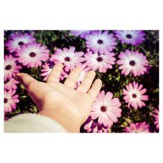 Podrán cortar todas las flores pero no podrán detener la primavera.  Oyee!! Que hay NUEVO VÍDEO!!!!! SUSCRIBETE  COMENTA  DALE LIKE  QUE ES GRATIS joer! (enlace en la biografía) #movilgrafias #movilgrafiadeldia050516 #valenciagrafias #igersvalencia #igersspain #iglobal_photographers  #fotonline_es #primaveragrafias @movilgrafias #manosexploradoras by clavebaja
