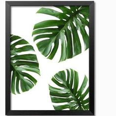 Tropical Monstera feuille Art Digital des feuilles des - Apocalypse Now And Then