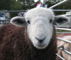 The Herdy Company was originally inspired by the Herdwick sheep.  The company supports sustainable rural community projects both at home & overseas.