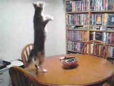 Techno dancing funny cats