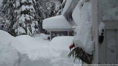 Snowbound in Kitimat Canada, The trees create a winter wonderland!