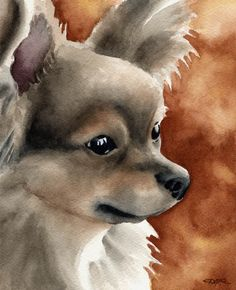 LONG COAT CHIHUAHUA Dog Art Print Signed by Artist by k9artgallery   WATERCOLOR