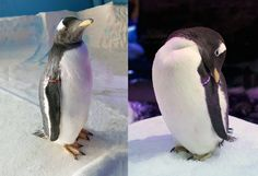 The cute little penguins at The Deep that were born in June have been given brilliant names.