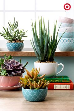 Cute mini bowls and classic mugs are unexpected ways to show off your…