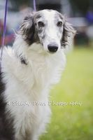 Quinni East Coast, Dogs, Photography, Animals, Photograph, Animales, Animaux, Pet Dogs, Fotografie
