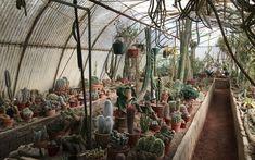 Air Plants, as plantas que sobrevivem sem terra Palm Springs, Botanical Gardens, Garden Landscaping, Landscape, Plants, Flower Shops, Getting To Know, Nature, The World