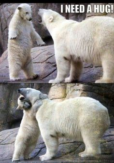 bear hug- mother and child polar bears