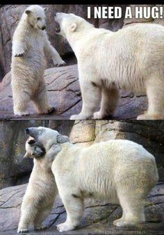 bear hug- mother and child polar bears