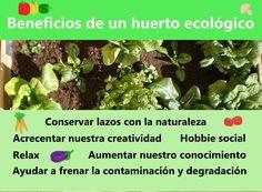 Importancia de la alimentación saludable. Da un paso más en tu vida, súmate a la alimentación ecológica y crea tu propio huerto!