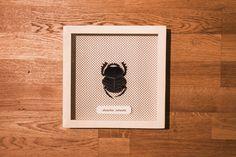 Scarabeus Catenatus   total black