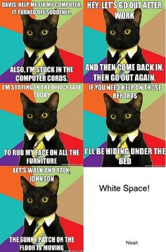 business cat gif - Google Search