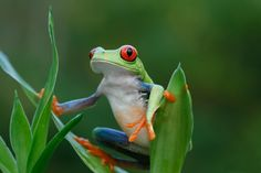 Costa Rica was elected best wildlife destination in the world, want to know why?    http://www.crstours.com/blog/costa-rica%252C-the-best-wildlife-destination/