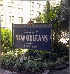 Welcome to New Orleans Nola