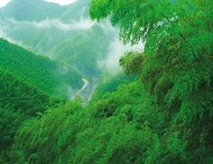 Image result for bamboo forest from above
