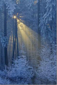 Winter forest in Carpathian mountings, UKRAINE