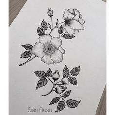 black and white wild roses botanical tattoo - Google Search