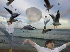 Become you inner Jungkook Seagull K Pop, Bts Meme Faces, Funny Faces, Foto Bts, Bts Bangtan Boy, Jimin, Flipagram Video, Reaction Pictures, Funny Pictures