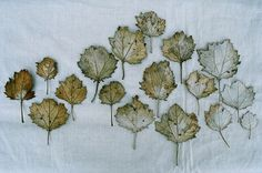 Winter leaves by may