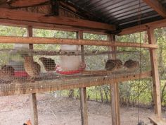 quail Archives - View from the Front Porch Quail House, Quail Pen, Quails, Homesteads, Pheasant, Pigeon, Front Porch, Farming, Pens