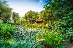 Lotus pond around with green tree by hadkhanong on Creative Market