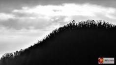 Bosque de eucaliptos - Amanecer con vista al cerro Auqui, Quito, Ecuador. // Dawn overlooking the Auqui hill, Quito, Ecuador.