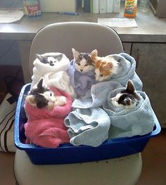 Who ordered the purritos?
