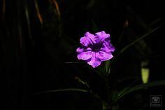 Flor, Natureza.