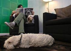 Four Journal - The digital dog loving publication puts a paw into the world of print