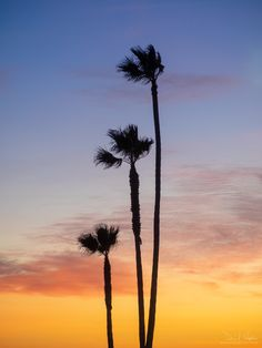 "Palm Family A ""family"" of palm trees, silhouetted against a sunset over the Pacific Ocean. Ocean Sunset, Frozen In Time, Pacific Ocean, Palm Trees, California, Clouds, Beach, Nature, Photography"