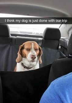 10+ Hilarious Dog Snapchats That Are Impawsible Not To Laugh At (Part 2) #funnydoglaughter