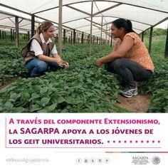 A través del componente Extensionismo, la SAGARPA apoya a los jóvenes de los GEIT Universitarios. SAGARPA SAGARPAMX #MéxicoSiembraÉxito