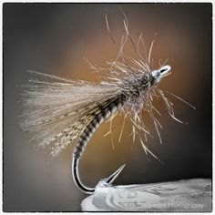 Grayling CDC dry fly