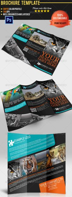 Explore Africa Trifold Brochure  Brochures Brochure Template And