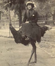 The ostrich ride...