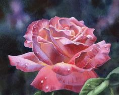 """""""DEWDROPS ON ROSES watercolor rose flower painting"""" - Original Fine Art for Sale - � Barbara Fox"""