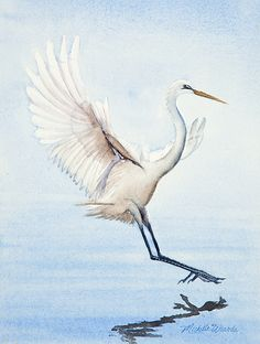 Heron Painting - Heron Landing Watercolor by Michelle Wiarda Watercolor Bird, Watercolor Animals, Watercolor Paintings, Watercolours, Art Studies, Pictures To Paint, Bird Art, Painting Inspiration, New Art