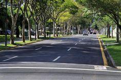 Arborização das ruas de Curitiba, rua Desembargador Motta, trecho entre as ruas Manoel Ribas e Saldanha Marinho. Foto:Valdecir Galor/SMCS(arquivo)