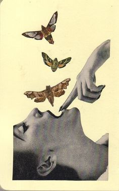 Artist Tim Lukeman    Collage / Art / moth / butterfly