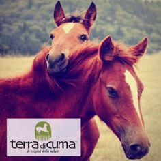 La professionalità e l'esperienza del team di Terra di Cuma sono alla base della qualità dei prodotti cosmetici e degli alimenti complementari per cavalli.