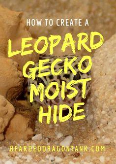 Leopard Gecko Moist Hide
