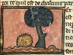 Medieval Hedgehog