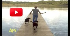 Fetch Fail! Two Dogs That Have NO Desire To Jump Into The Lake Totally Surprise Their Human…Hilarious!   The Animal Rescue Site Blog
