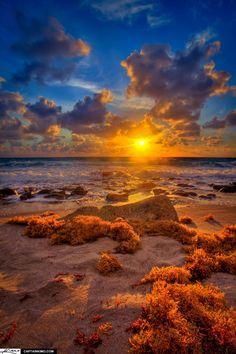 Sun Rise Burning Seaweed at Carlin Park Beach Jupiter Florida