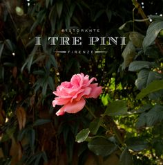 Come and enjoy an authentic Tuscan dinner outside in our beautiful garden at Ristorante I Tre Pini Firenze. Our spacious garden in Florence, Italy is the perfect place to host weddings, anniversaries, communions and celebrations of any kind! http://www.ristoranteitrepini.it/