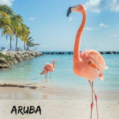 Are you thinking of booking a trip to Aruba? We know of a couple friends who would be tickled pink if you did!