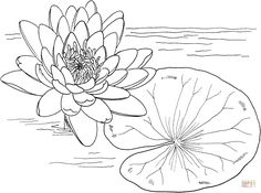 Best Monet Water Lilies Coloring Page for Kids with Super Easy Monet Water Lilies Coloring Page Picture