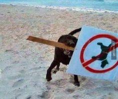 anarşist köpek