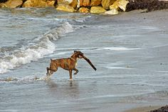 Snaggle Foot Dog Walks and Pet Care - Round Lake, IL: Dog Friendly Beaches In Chicago !